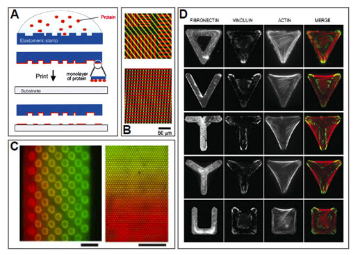 microfluidics Substrate patterning using microcontact printing